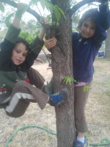 The kids climbing in Grammy's backyard.  I'm glad there are trees in Thailand.  They would be sad with nothing to climb.