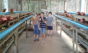 The kids taking a tour of the chicken farm. Don't get alarmed. These chickens are well-fed, have room to move around and they're safe from predators. Free-range is a goal we're working toward.
